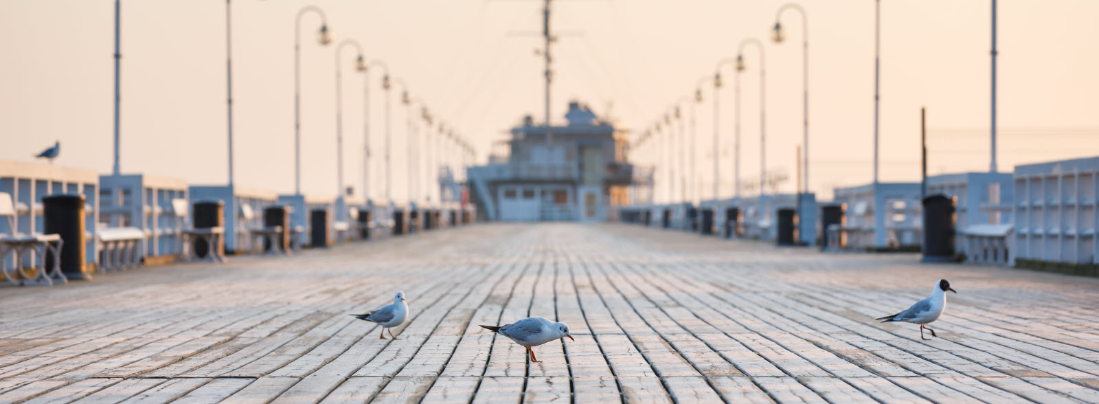 Seagull on the wooden pier during the sunrise.