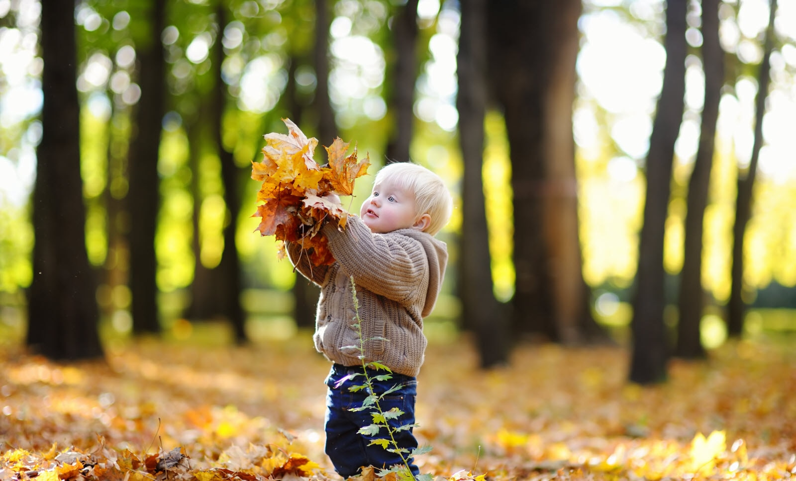 Boy playing with autumn leaves in park
